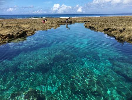 自然の水槽!潮溜まりイノー観察&シュノーケリング