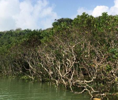 海の森マングローブ・サップ(SUP)
