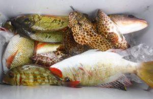 カヤックフィッシング(釣り)